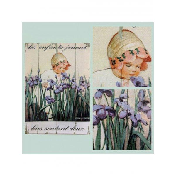 Canvas Print 28cm x 20cm - sweet smelling iris
