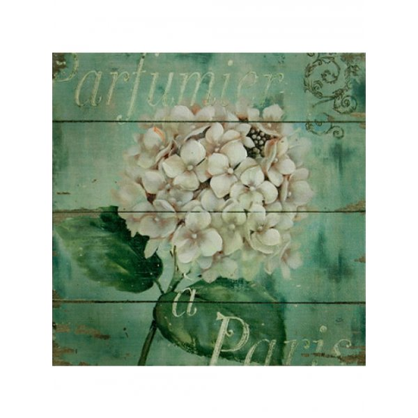 Canvas Print 24cm x 24cm - Hydrangea